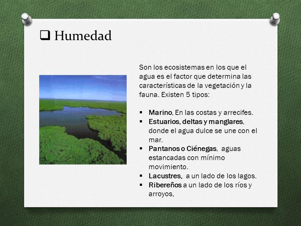 Humedad Son los ecosistemas en los que el agua es el factor que determina las características de la vegetación y la fauna. Existen 5 tipos: