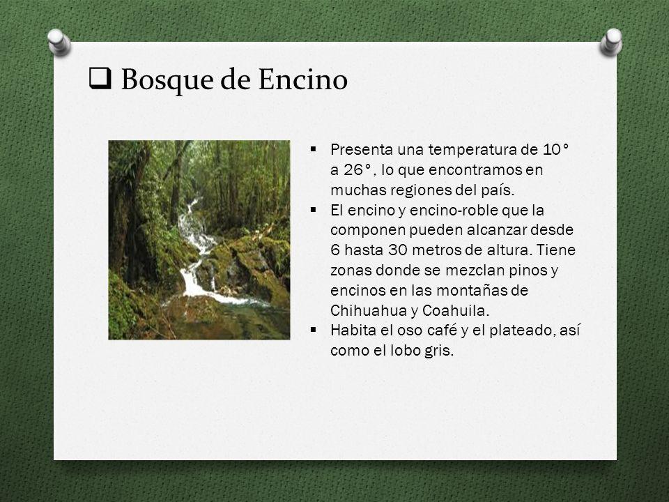 Bosque de Encino Presenta una temperatura de 10° a 26°, lo que encontramos en muchas regiones del país.