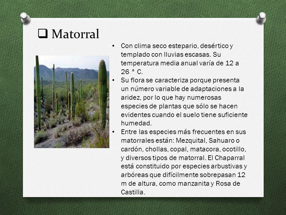 Matorral Con clima seco estepario, desértico y templado con lluvias escasas. Su temperatura media anual varía de 12 a 26 ° C.