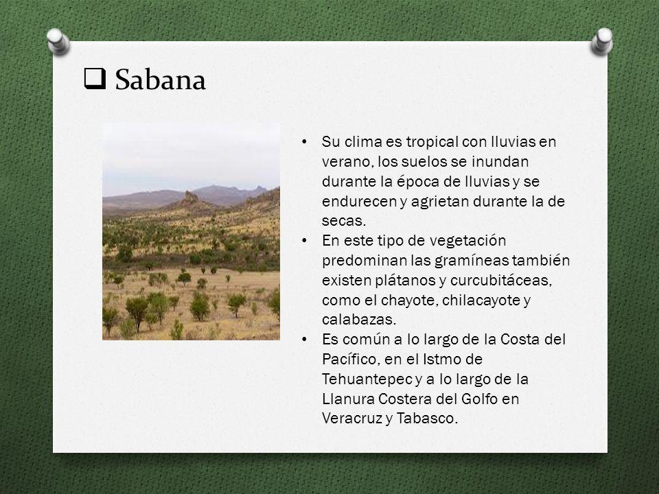 Sabana Su clima es tropical con lluvias en verano, los suelos se inundan durante la época de lluvias y se endurecen y agrietan durante la de secas.