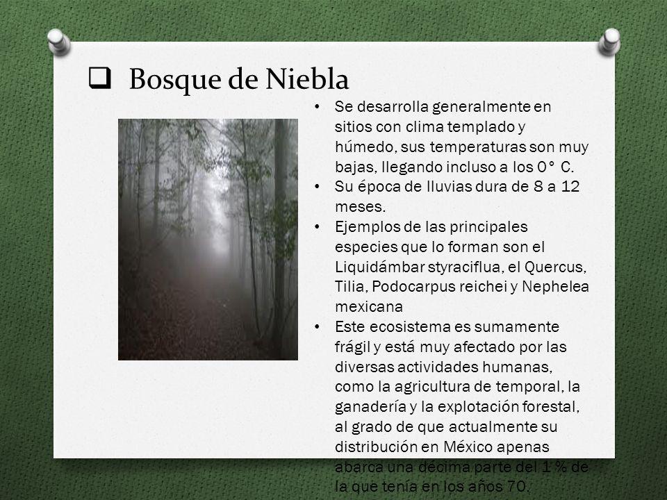 Bosque de Niebla Se desarrolla generalmente en sitios con clima templado y húmedo, sus temperaturas son muy bajas, llegando incluso a los 0° C.