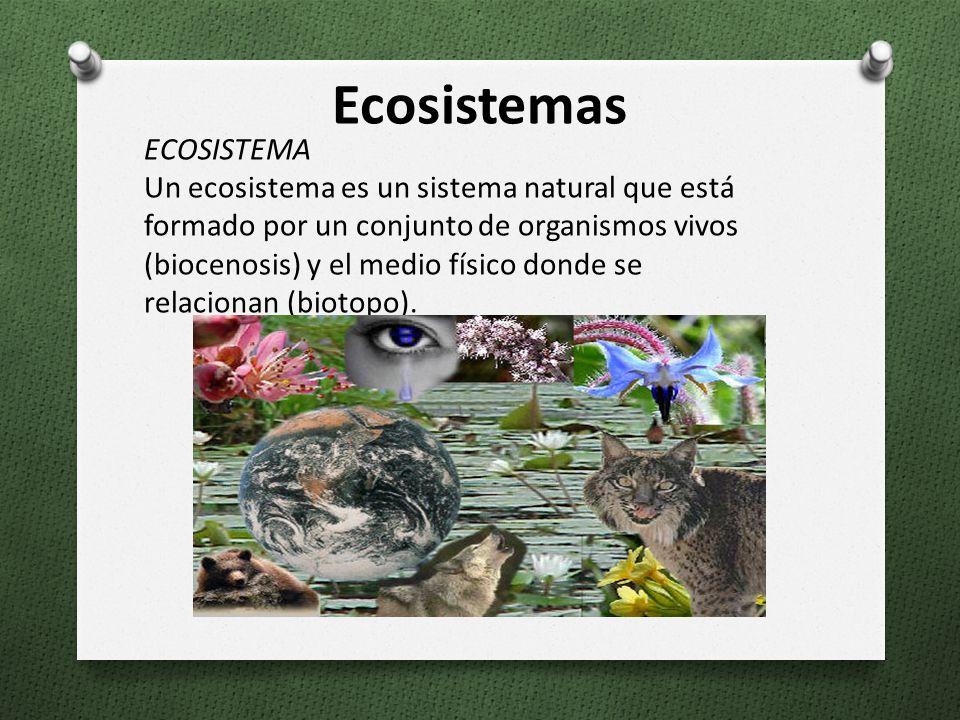 Ecosistemas ECOSISTEMA