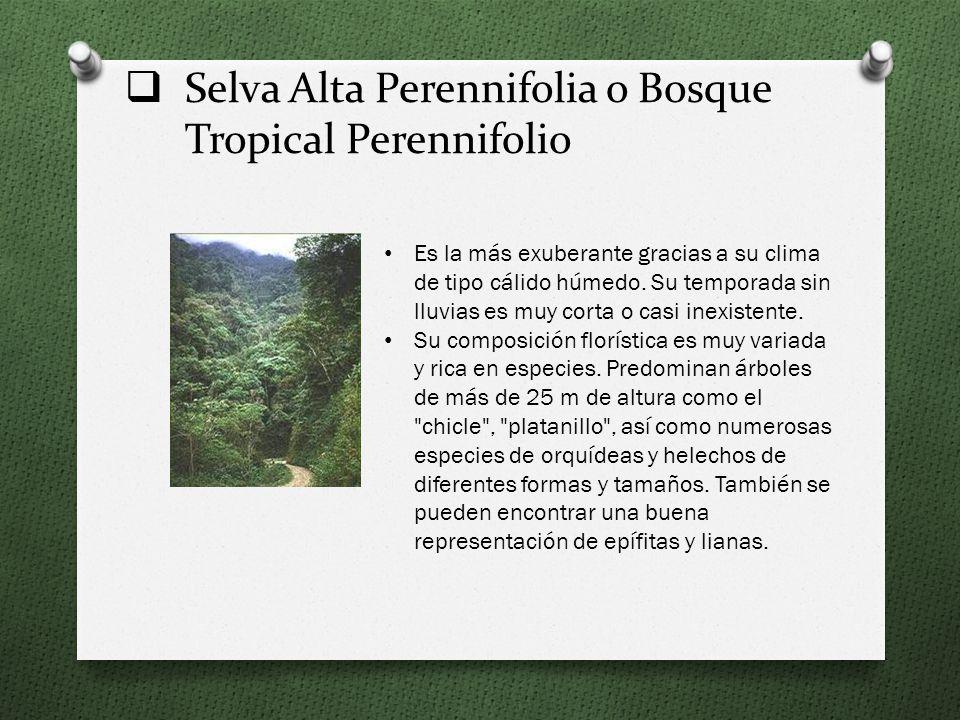 Selva Alta Perennifolia o Bosque Tropical Perennifolio