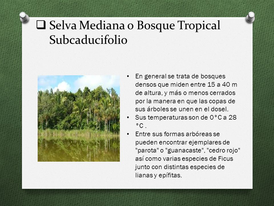 Selva Mediana o Bosque Tropical Subcaducifolio