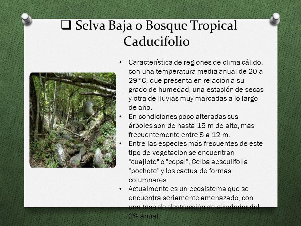 Selva Baja o Bosque Tropical Caducifolio