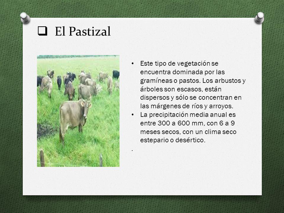 El Pastizal
