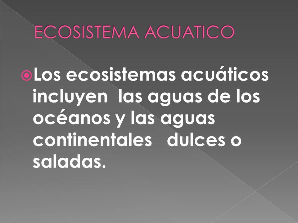 ECOSISTEMA ACUATICO Los ecosistemas acuáticos incluyen las aguas de los océanos y las aguas continentales dulces o saladas.