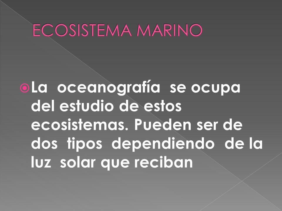 ECOSISTEMA MARINO La oceanografía se ocupa del estudio de estos ecosistemas.