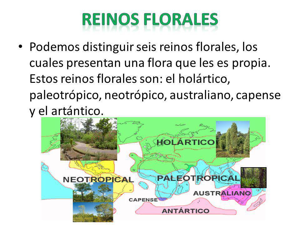 REINOS FLORALES