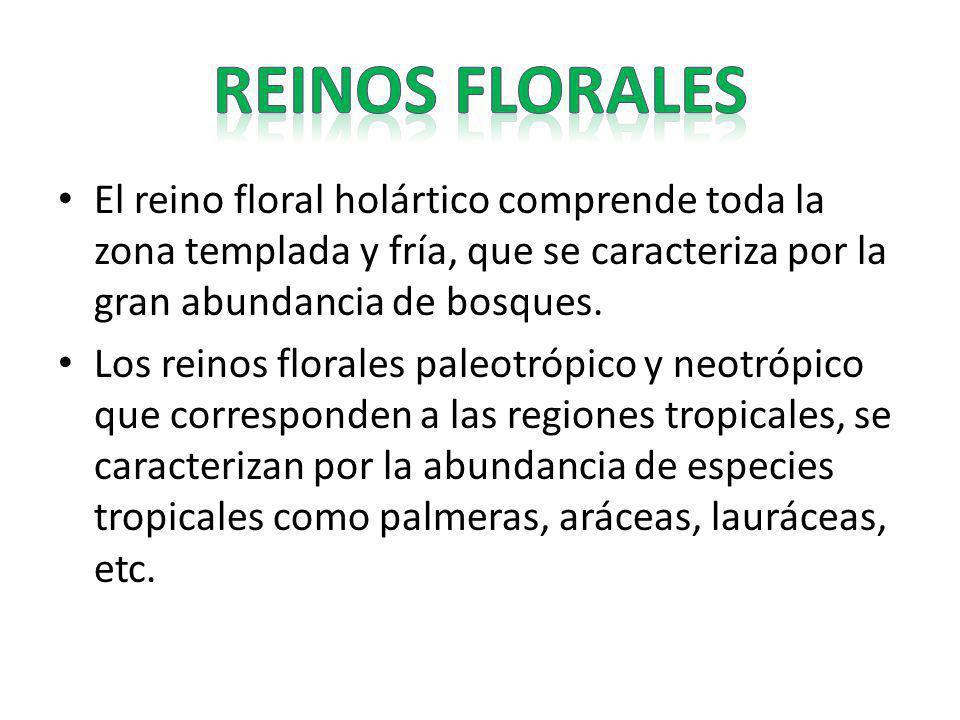 REINOS FLORALES El reino floral holártico comprende toda la zona templada y fría, que se caracteriza por la gran abundancia de bosques.