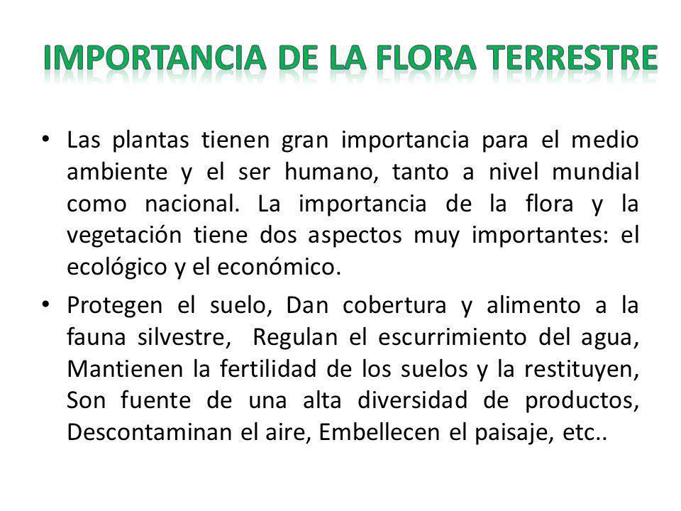 IMPORTANCIA DE LA FLORA TERRESTRE