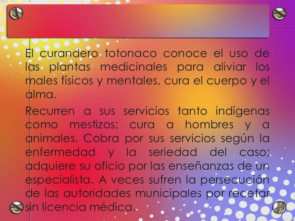 El curandero totonaco conoce el uso de las plantas medicinales para aliviar los males físicos y mentales, cura el cuerpo y el alma.
