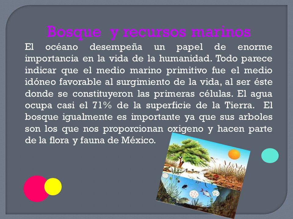 Bosque y recursos marinos