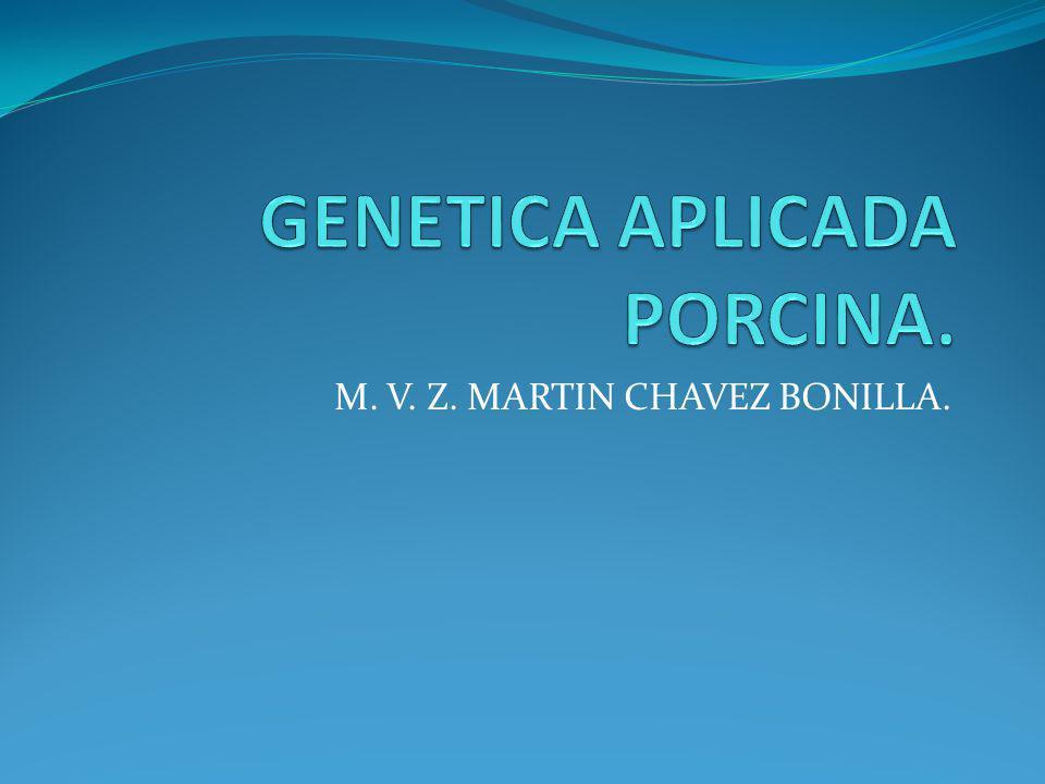 GENETICA APLICADA PORCINA.