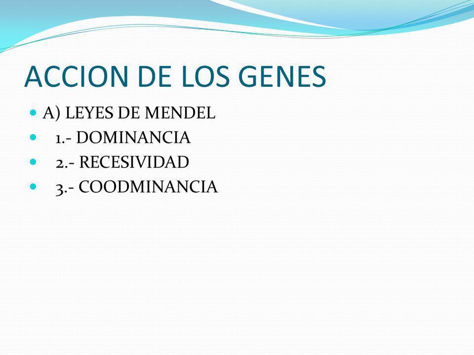 ACCION DE LOS GENES A) LEYES DE MENDEL 1.- DOMINANCIA 2.- RECESIVIDAD