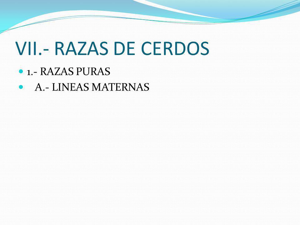 VII.- RAZAS DE CERDOS 1.- RAZAS PURAS A.- LINEAS MATERNAS