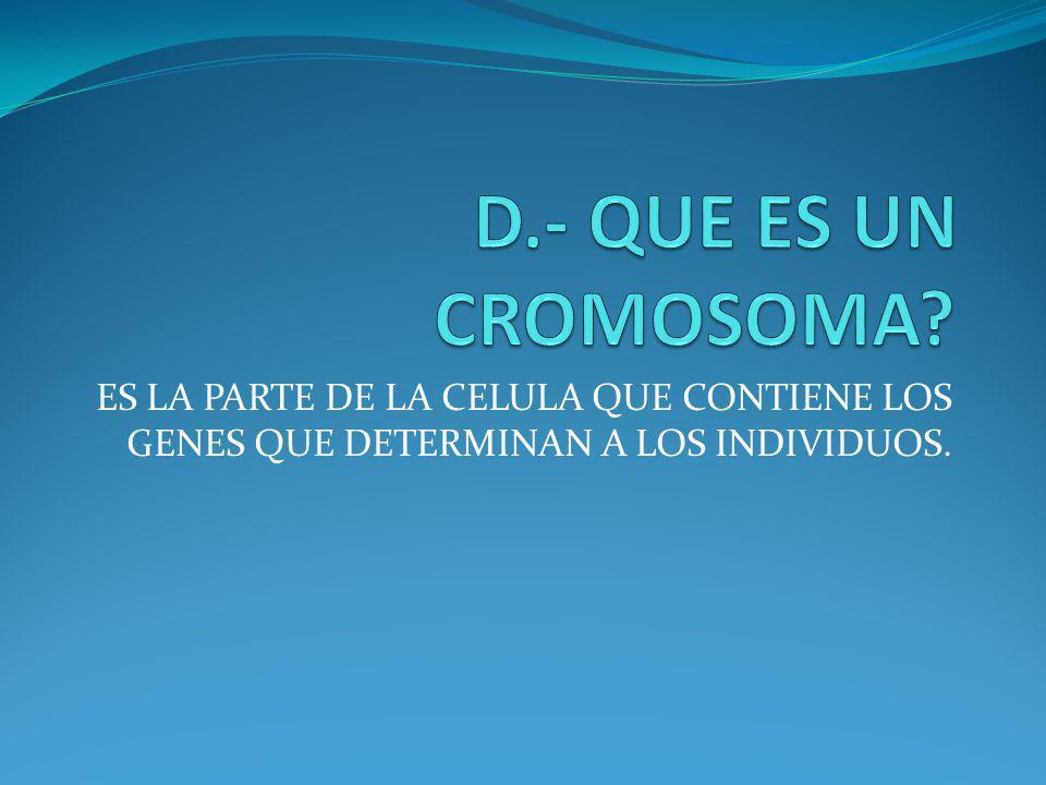 D.- QUE ES UN CROMOSOMA.