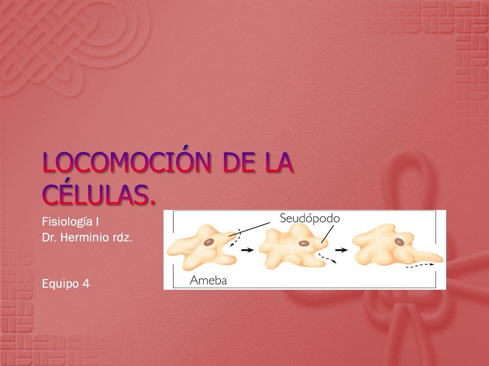 Locomoción de la células.