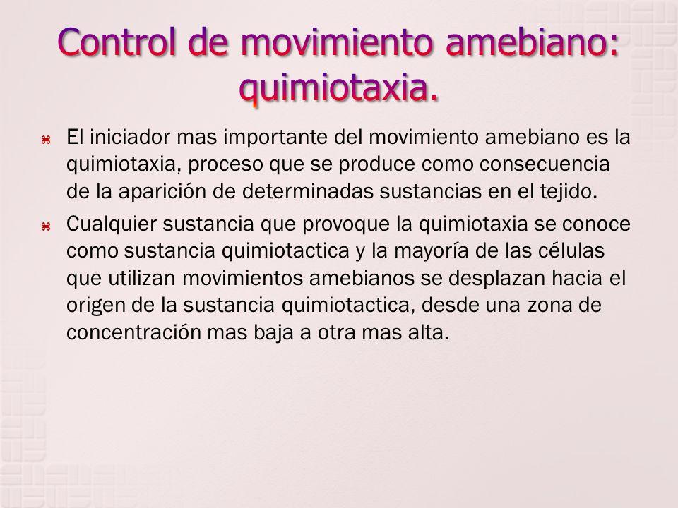 Control de movimiento amebiano: quimiotaxia.