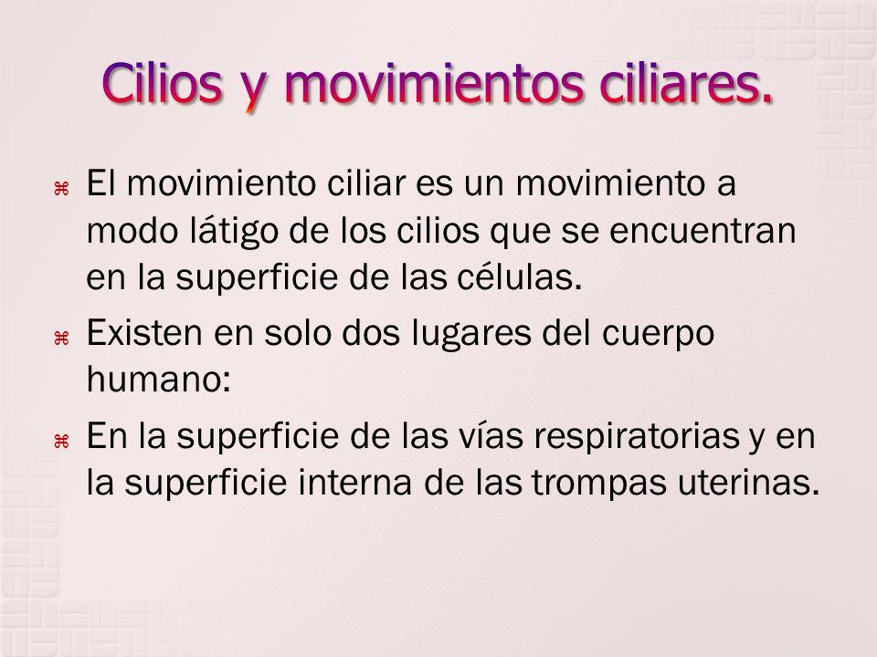 Cilios y movimientos ciliares.