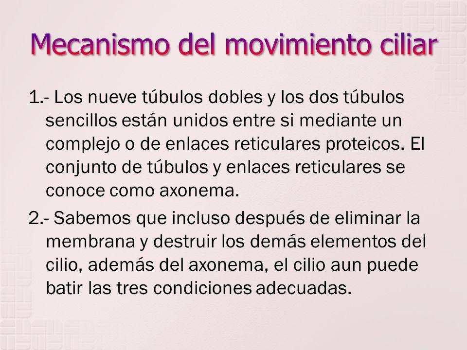 Mecanismo del movimiento ciliar