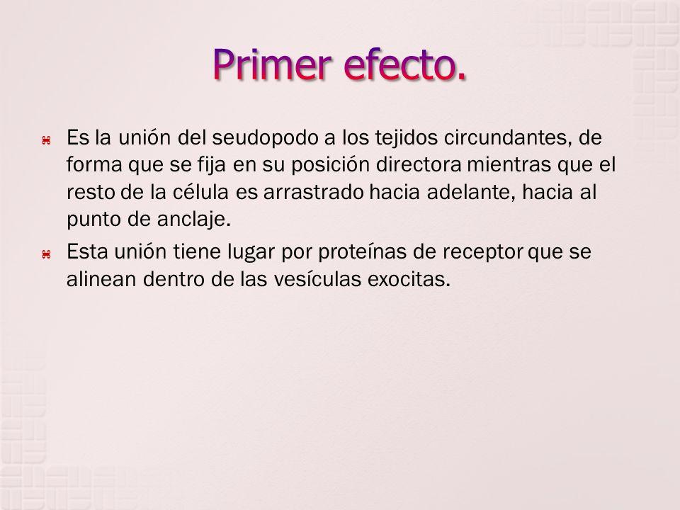 Primer efecto.