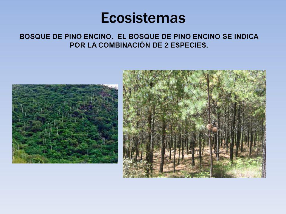 Ecosistemas BOSQUE DE PINO ENCINO.