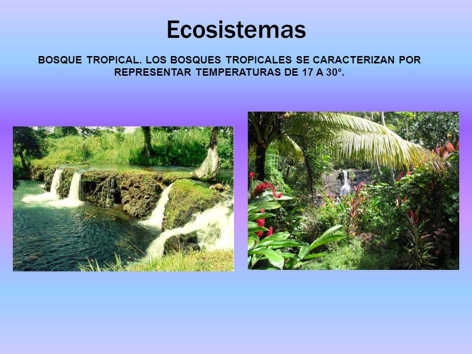 Ecosistemas BOSQUE TROPICAL.