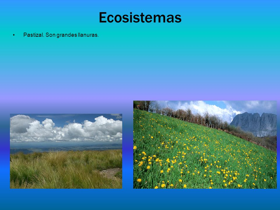 Ecosistemas Pastizal. Son grandes llanuras.