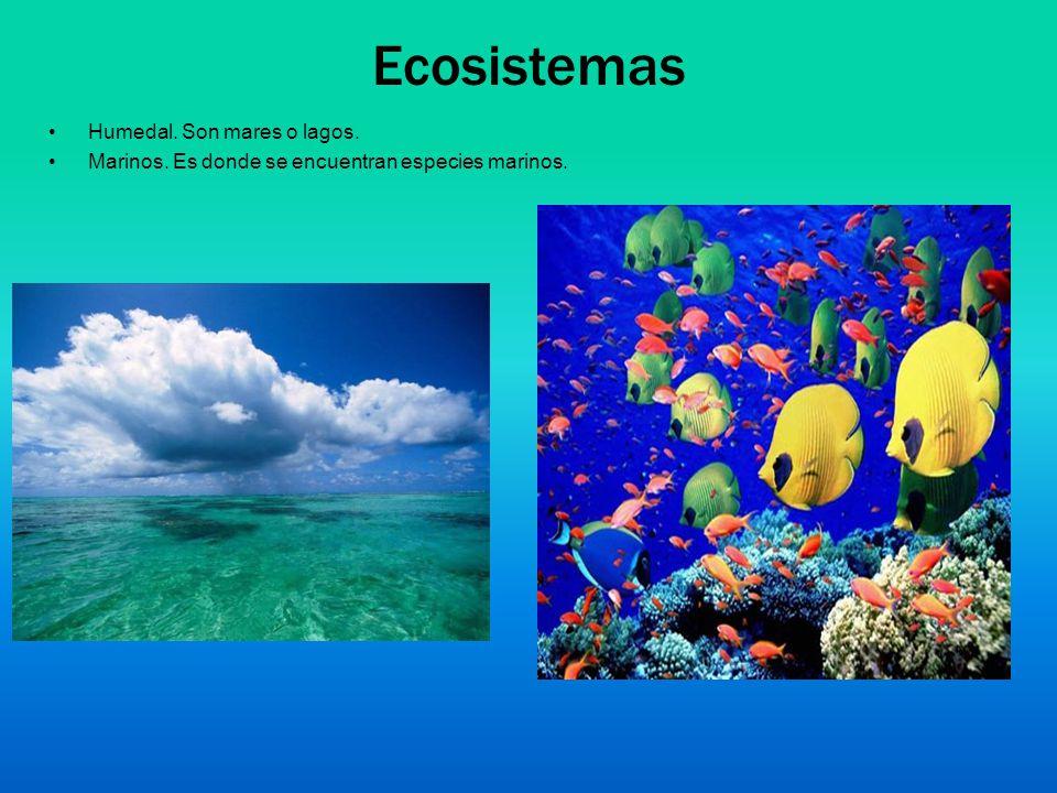 Ecosistemas Humedal. Son mares o lagos.