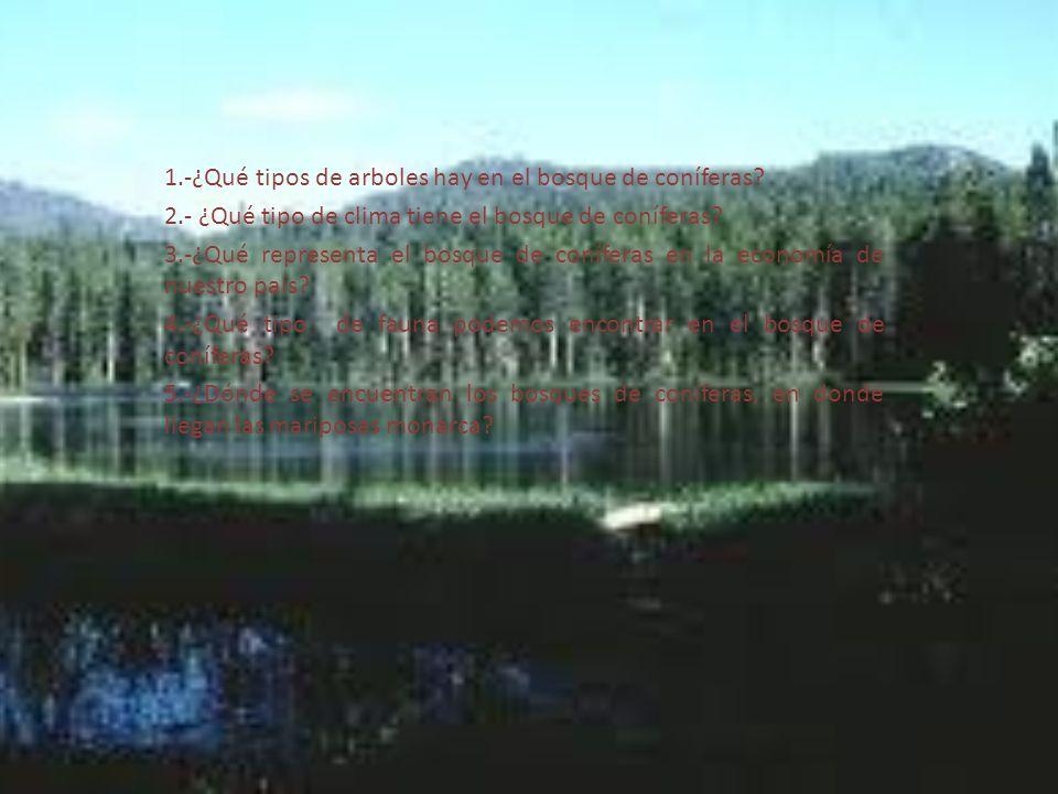 1.-¿Qué tipos de arboles hay en el bosque de coníferas