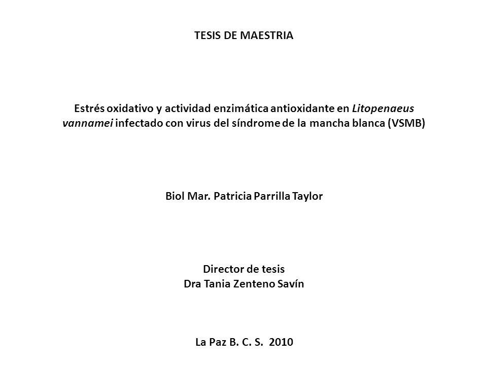 Biol Mar. Patricia Parrilla Taylor