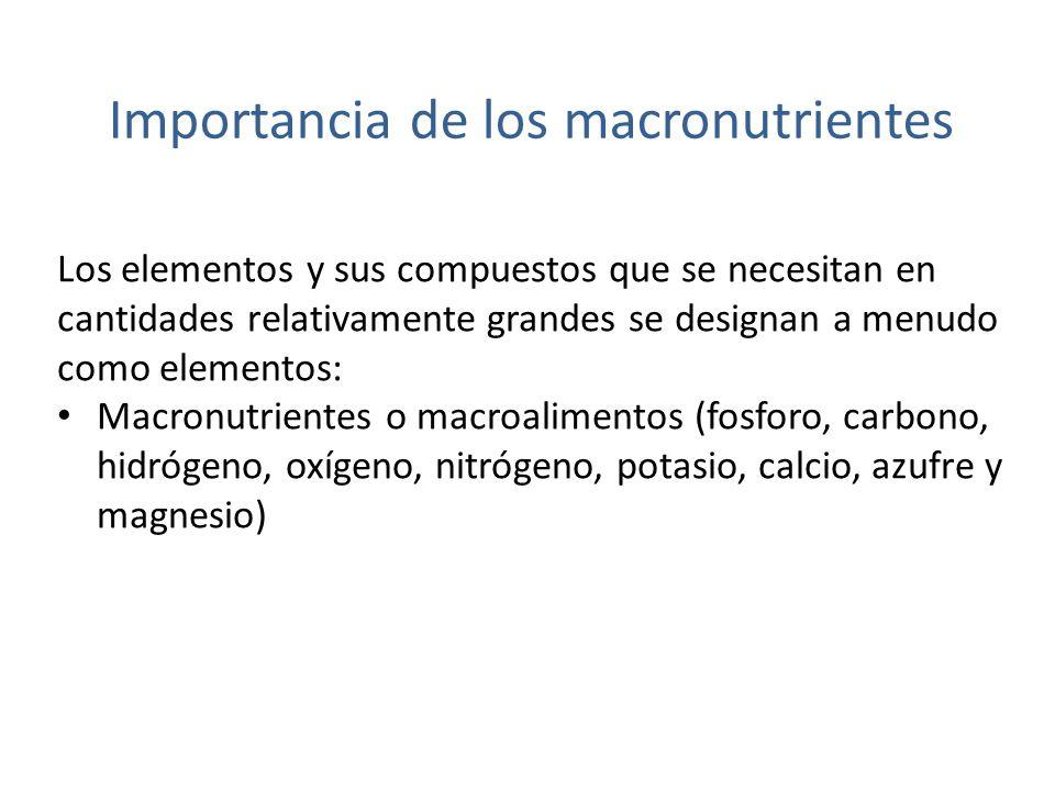 Importancia de los macronutrientes