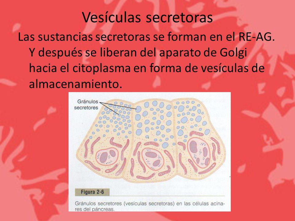 Vesículas secretoras