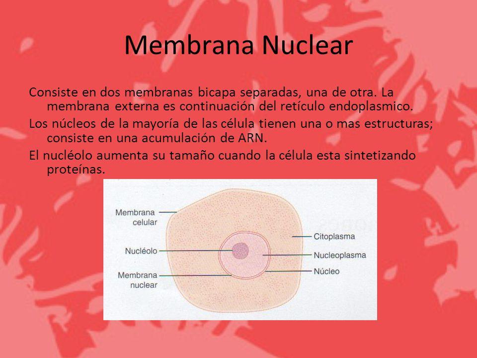 Membrana Nuclear
