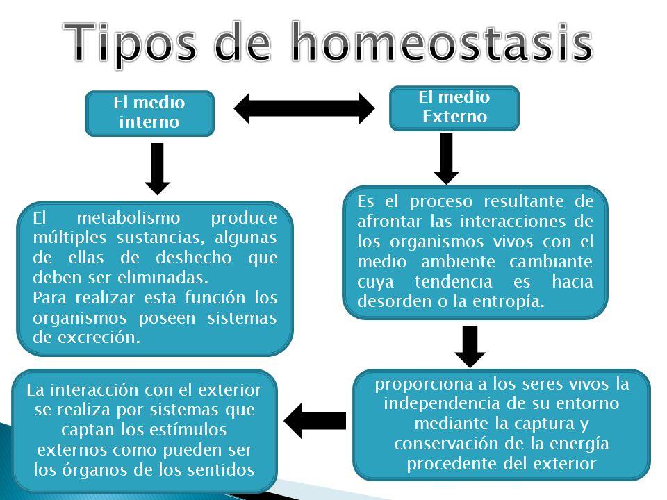 Tipos de homeostasis El medio Externo El medio interno
