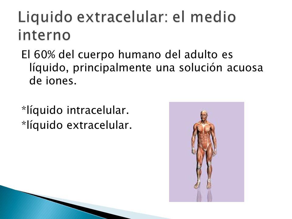 Liquido extracelular: el medio interno