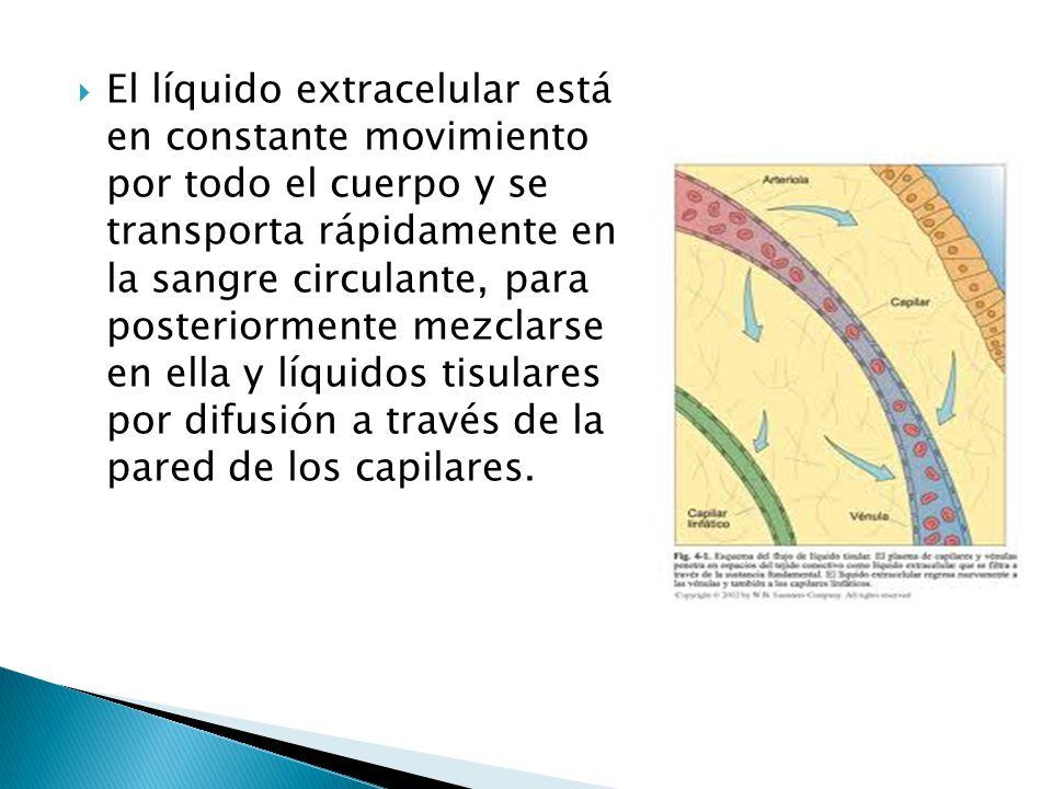 El líquido extracelular está en constante movimiento por todo el cuerpo y se transporta rápidamente en la sangre circulante, para posteriormente mezclarse en ella y líquidos tisulares por difusión a través de la pared de los capilares.