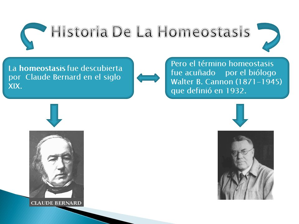 Historia De La Homeostasis