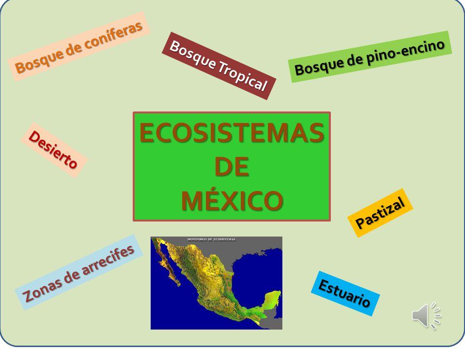 ECOSISTEMAS DE MÉXICO Bosque de coníferas Bosque de pino-encino