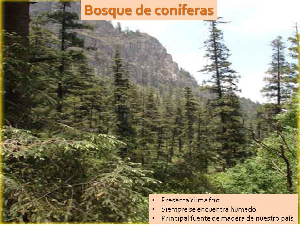 Bosque de coníferas Presenta clima frío Siempre se encuentra húmedo