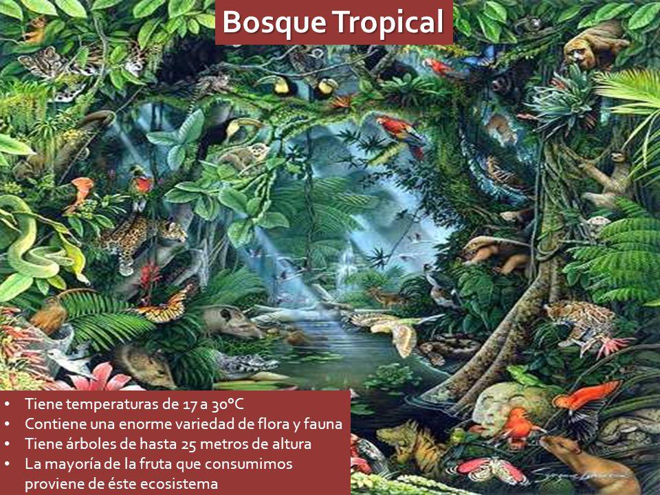 Bosque Tropical Tiene temperaturas de 17 a 30°C