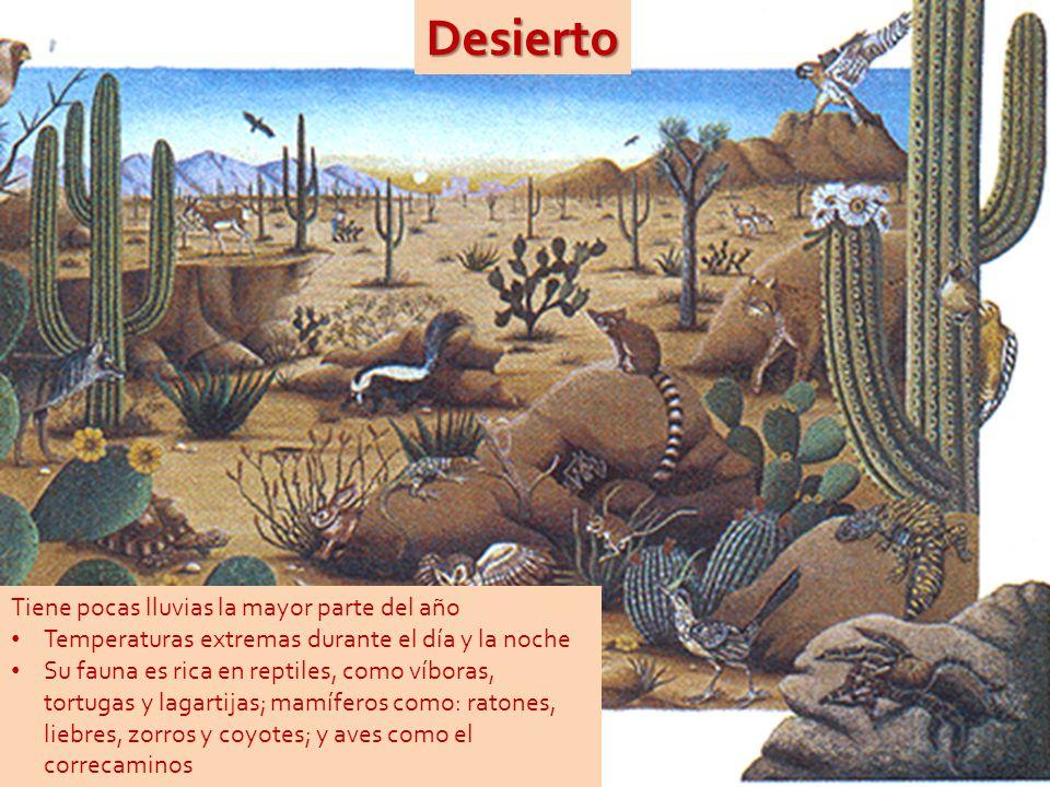 Desierto Tiene pocas lluvias la mayor parte del año