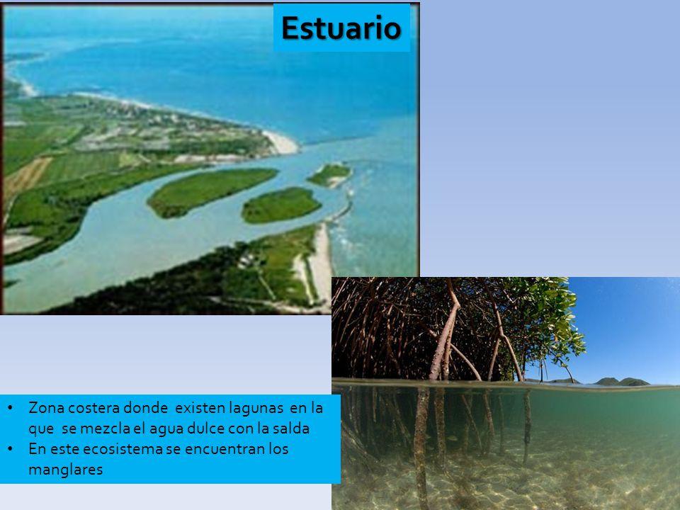 Estuario Zona costera donde existen lagunas en la que se mezcla el agua dulce con la salda.