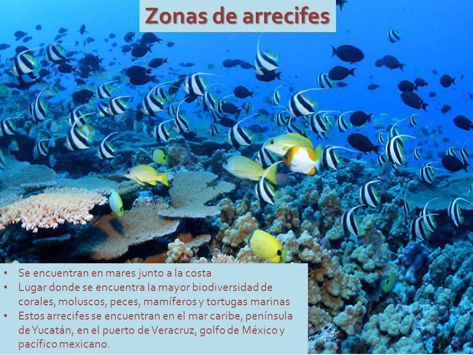 Zonas de arrecifes Se encuentran en mares junto a la costa