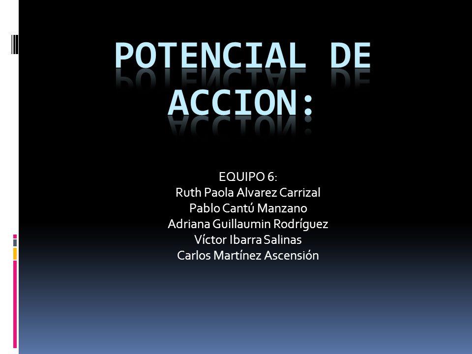 Potencial de accion: EQUIPO 6: Ruth Paola Alvarez Carrizal