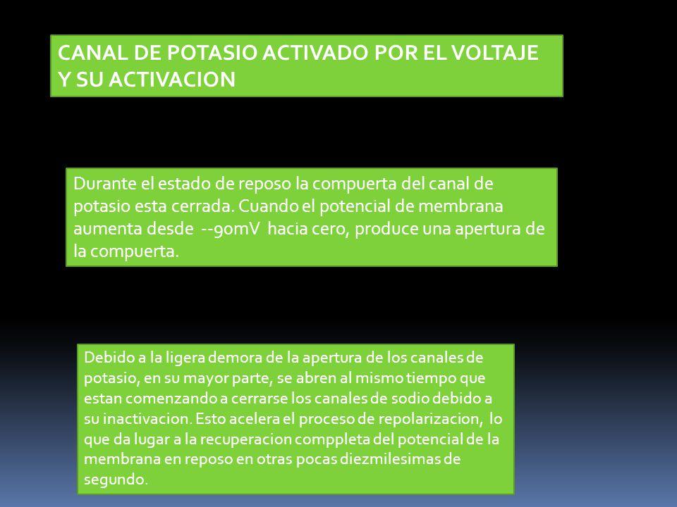 CANAL DE POTASIO ACTIVADO POR EL VOLTAJE Y SU ACTIVACION