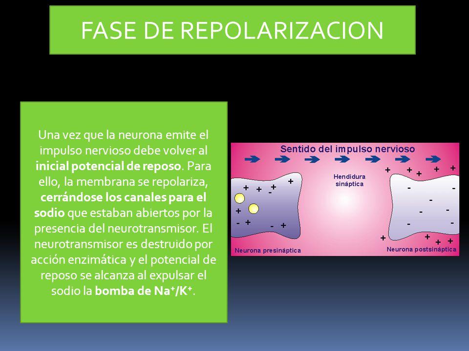 FASE DE REPOLARIZACION