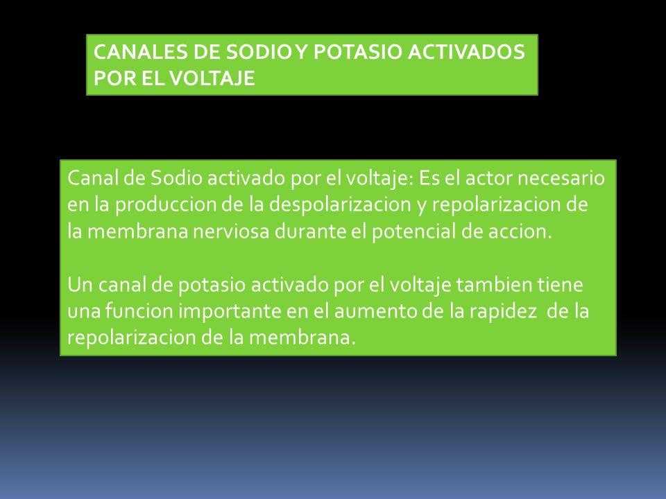 CANALES DE SODIO Y POTASIO ACTIVADOS POR EL VOLTAJE