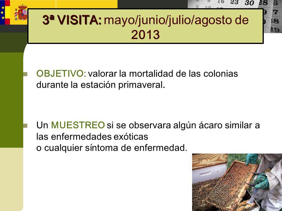 3ª VISITA: mayo/junio/julio/agosto de 2013